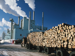 canfor pulp and paper research and development Forestry firm canfor launches project to turn bc wood waste into biocrude canadian pulp and paper company teaming up with australian firm on new cleantech demonstration project.