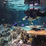 Aquarium Curator Career