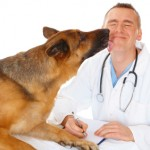 Veterinarian Career Info