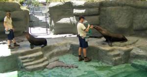 Zookeeper Career