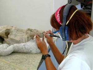 Paleontologist Career