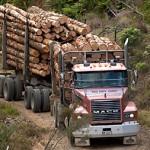 Wood Careers